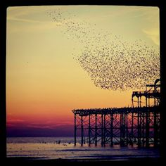 Beautiful Brighton - the old peer and the dance of the starlings used to be Rachel & David's kitchen view…before they moved to the London Bridge area. Brighton Rock, Brighton And Hove, Brighton England, Best Places To Live, Places To Visit, London City, London Bridge, Homes England, Places Of Interest