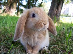 i. love. rabbits.