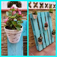Jardin on pinterest cactus succulents and cactus flower for Jardin vertical con palets