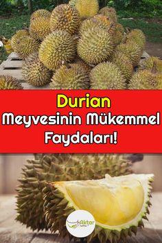 Sağlığa o kadar faydalı ki mutlaka denemelisiniz. #duriammeyvesifaydaları #durianfaydaları Fruit, Food, Meal, The Fruit, Eten, Meals