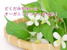 どくだみ化粧品 Parsley, Celery, Herbs, Vegetables, Food, Essen, Herb, Vegetable Recipes, Meals