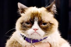 Cat Owners Take Twice as Many Pet Photos as Dog Owners, Study Finds Grumpy Cat Meme, Cat Memes, Grump Cat, Funny Dogs, Funny Animals, Cute Animals, Animal Espiritual, Hipster Cat, Owning A Cat