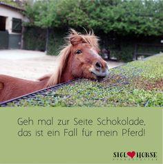 Geh mal zur Seite Schokolade, das ist ein Fall für mein Pferd! #pferde #pferdehumor