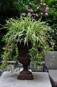 Urn with a spider plant I need to do this with mine :)