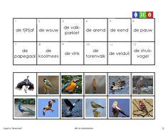 vogels 8