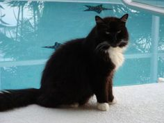 Sylvester...miss my furry buddy!