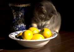 21 Natural Home Remedies for Pets : TreeHugger Ed from Ohio/CC BY 2.0 Fleas don't like citrus, make your pet's fur unsavory by rubbing it with a small amount of fresh lemon or orange juice. Bonus points for putting mostly-juiced citrus rinds to use.