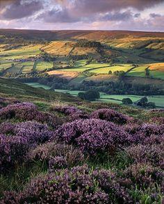 Dreamy English countryside...