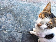"Cats are like Music. It's foolish to try to explain their worth to those who don't appreciate them. #cats #feline #cat #crazycatlady #like4follow #like4like #tagsforlikes #tagstagrammers #readme #burjuman #dubai #mydubai #moldiv #mydubaiphotos #uae #ilovecats #purr #slowblink #instadubai #livelovedubai #ilovedubai #iheartdubai #dubailife #igers #dubaiigers #smartphonephotography #mobilephotography #iphone6s #iphone6sphotography #shotoniphone6s by dhanyaasher Follow ""DIY iPhone 6/ 6S Cases…"