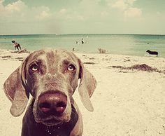 a day at the beach!