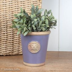 Kew Long Tom Small Plant Pot in Brassica Purple Lavender from the Royal Botanic Gardens Collection of Planters for Flowers and Plants Kew Gardens, Botanical Gardens, Outdoor Gardens, Purple Plants, Small Potted Plants, Terracotta Pots, Garden Pots, Earthy, Planter Pots