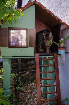 Une cabane extérieure pour chat... Alice, Palette, Deco, Cats, Animaux, Pet Furniture, Bricolage, Pallets, Decor
