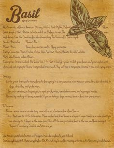 Grimoire Page - Herbs - Basil Magic Herbs, Herbal Magic, Plant Magic, Green Witchcraft, Wicca Witchcraft, Wiccan, Healing Herbs, Medicinal Plants, Practical Magic