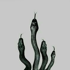 snake, slytherin, and harry potter afbeelding