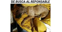Find the killer of this dog in Munera