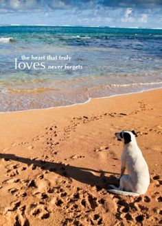 I would send this one in memory of a dog or dog lover..it is just so sweet.