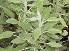 good basic list of beginners medicinal (and culinary) herb garden