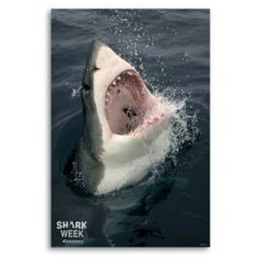 "Shark Week ""Open Wide"" Poster"
