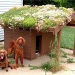 Toit fleuri sur une niche de chien ©inconnu