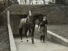 """Nearco, great-great grand sire. (January 24, 1935 – June 27, 1957) was an Italian-bred Thoroughbred racehorse described by Thoroughbred Heritage as """"one of the greatest racehorses of the Twentieth Century"""" and """"one of the most important sires of the century."""" He was not only unbeaten, winning 14 races at distances from 5 furlongs (1,000m) to 1 mile 7 furlongs (3,000m), but also was the patriarch of the most dominant sire line in Thoroughbred history."""