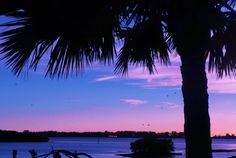 From the Deck and Tiki bar at the Sworfish Grill. Watch the boats bring in the freshest catch, enjoy a cocktail and meal, listen to live music and get the sunset, all in one stop. Perks of and #IslandVacation Book yours today http://beachrentals.mobi/ #BradentonFlorida #VacationFloida #Beachrentals