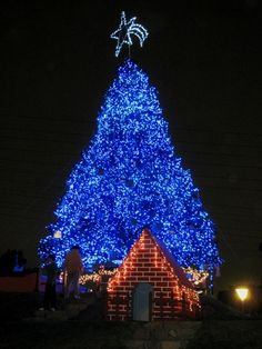 blue christmas tree pretty blue christmas lights lighted christmas trees christmas light displays - Christmas Tree With Blue Lights