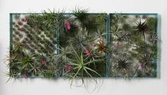 AirplantFrame (large)