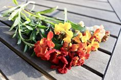 Natural Bouquet, Nature, Plants, Naturaleza, Plant, Off Grid, Natural, Mother Nature, Planting