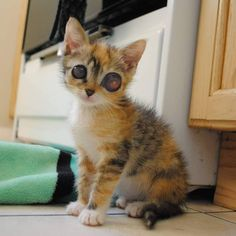They rescued a tiny kitten with frog-like eyes and an amazing fight to live. Meet Oomi the miracle kitty! Courtesy: Oomi The Kitten A tiny 4-week-old kitten with huge eyes came to the ASPCA Kitten Nursery in New York City about a month ago. The little tortie girl needed a lot of help and TLC. ...