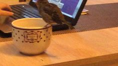 My Birds!