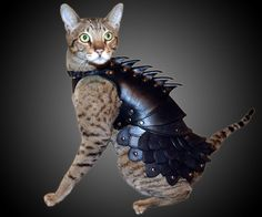 Cat Battle Armor | DudeIWantThat.com I think this is really on etsy.com pretty sure my sister in law would love this!