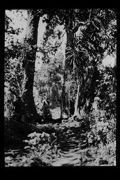 Ausruhen im Schatten des Waldes