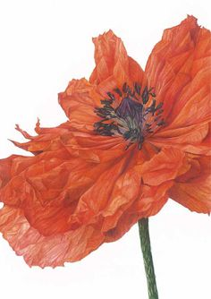 Fiona Strickland: Strictly Botanical at The Park Gallery by Falkirk Community Trust
