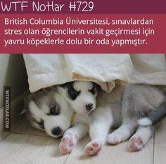 Yavru köpekler.