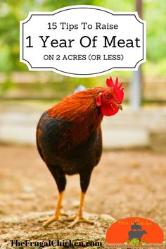 Yes, you can raise one year of meat on less than 2 acres! Here's 15 in-depth tips to get you started.: