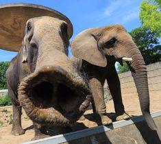 PEDRO HITOMI OSERA: China proíbe importação de marfim por um ano