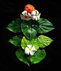 Rangoli Designs Flower, Rangoli Designs Diwali, Rangoli Designs Images, Flower Rangoli, Diwali Decorations At Home, Festival Decorations, Flower Decorations, Lord Ganesha Paintings, Ganesha Art