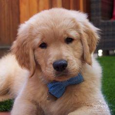 Gentle puppy                                                                                                                                                                                 More