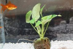 how to clean goldfish tank without vacuum