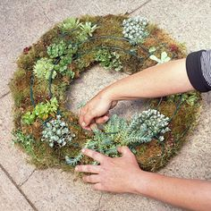 plant a living wreath...I love it!      Top plant picks for living wreath include:  -- Aeoniums  -- Rosary vine (Ceropegia)  -- Crassulas  -- Echeverias  -- Euphorbias  -- Haworthias  -- Hens-and-chicks (Sempervivum)  -- Kalanchoes  -- Sedums (groundcover types)