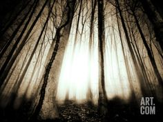Sunlight Shining through Dense Forest Photographic Print by Jan Lakey at Art.com