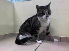 RT @ngremmy: #URGENT #CATS: adorable OREO needs out help NOW, TONIGHT! https://facebook.com/PetsOnDeathRow/photos/a.576546742357162.1073741827.155925874419253/787504117928089/?type=1 … pic.twitter.com/RRzYMNksmp