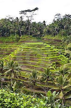 Bali indonesian terrace