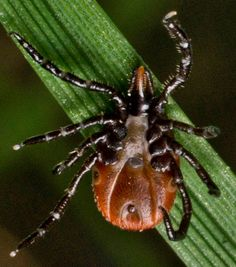 Protect Yourself from Ticks (And Lyme Disease) This Season