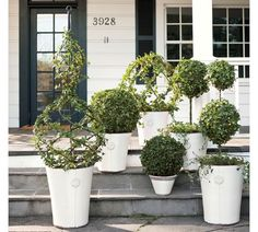 Topiaries on the front porch? Love the look, just not the prices. These are from Pottery Barn.
