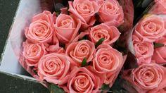 #Rose #Rosa #Annakarina; Available at www.barendsenl.nl
