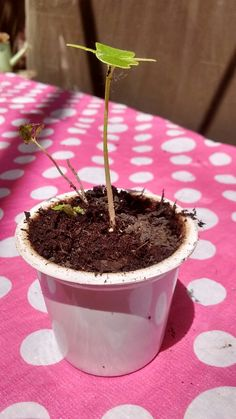 Step 3: plant seed in soil/coffee ground pod mixture. Add Water and Sun accordingly..be patient! & Whalah!! Nature does the rest! & you've done your part to upcycle, repurpose,reuse used coffee pods instead of tossing into trash or recycle bin right away!