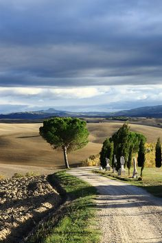 Tuscany, Italy  Imagine yourself listening to some feel good music, running down this same path :)