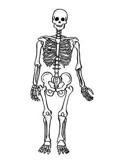 Esqueleto humano para colorear e identificar sus partes