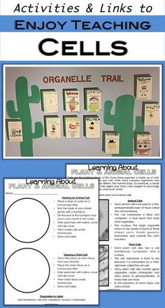 Teaching Cells with a Short Unit for Fourth Grade and Fifth Grade Students - Have fun introducing cells! Your fourth grade and fifth grade students will love looking under the - Science Lesson Plans, Science Curriculum, Science Lessons, Science Education, Physical Science, Science Experiments, Higher Education, Science Cells, Science Biology